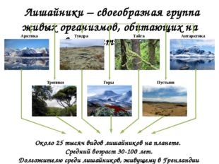Лишайники – своеобразная группа живых организмов, обитающих на всех континен