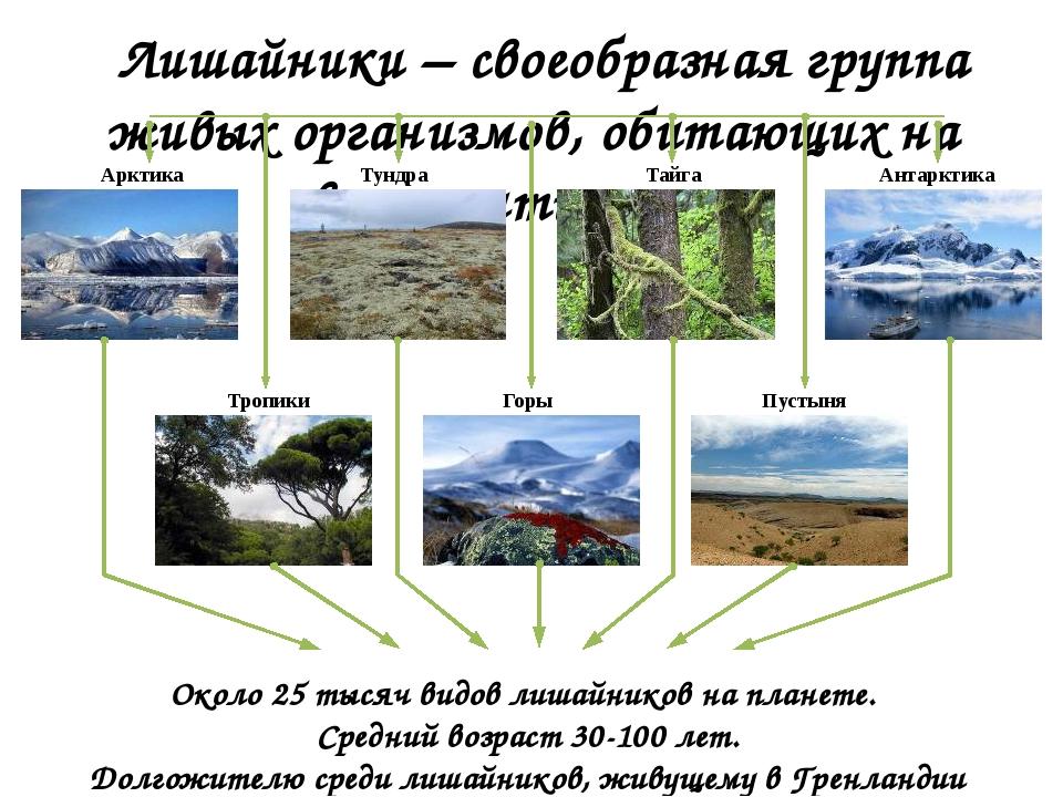 Лишайники – своеобразная группа живых организмов, обитающих на всех континен...