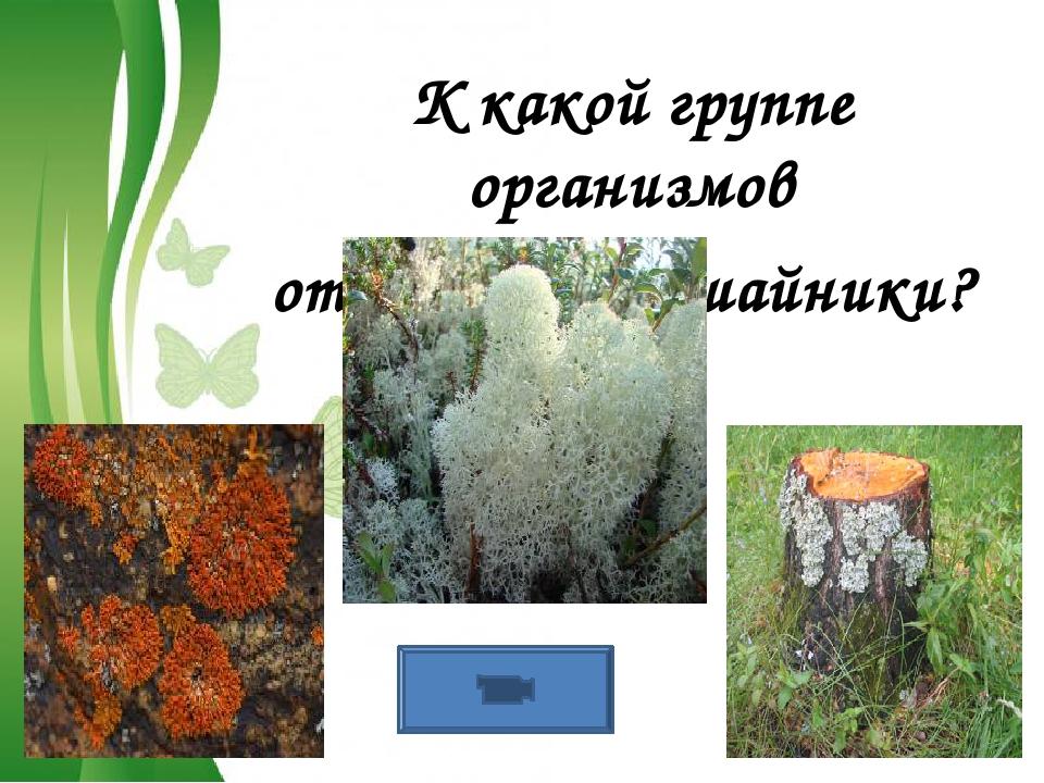 Free Powerpoint Templates К какой группе организмов относятся лишайники?
