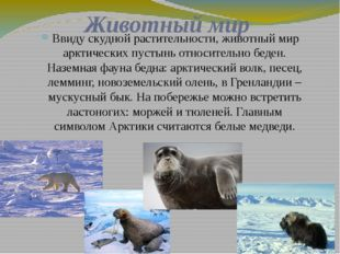 Животный мир Ввиду скудной растительности, животный мир арктических пустынь о