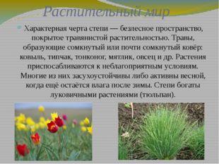 Растительный мир Характерная черта степи— безлесное пространство, покрытое т