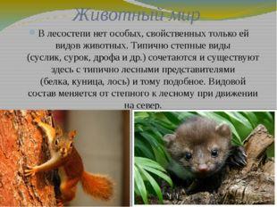 Животный мир В лесостепи нет особых, свойственных только ей видов животных. Т