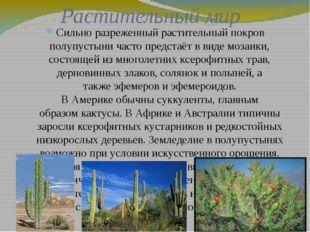 Растительный мир Сильно разреженный растительный покров полупустыни часто пре