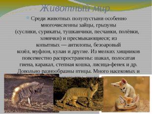 Животный мир Среди животных полупустыни особенно многочисленнызайцы, грызуны