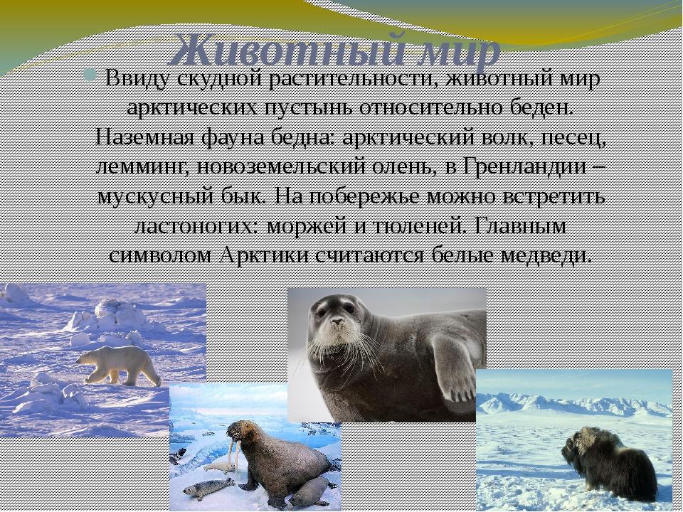 Животный мир Ввиду скудной растительности, животный мир арктических пустынь о...