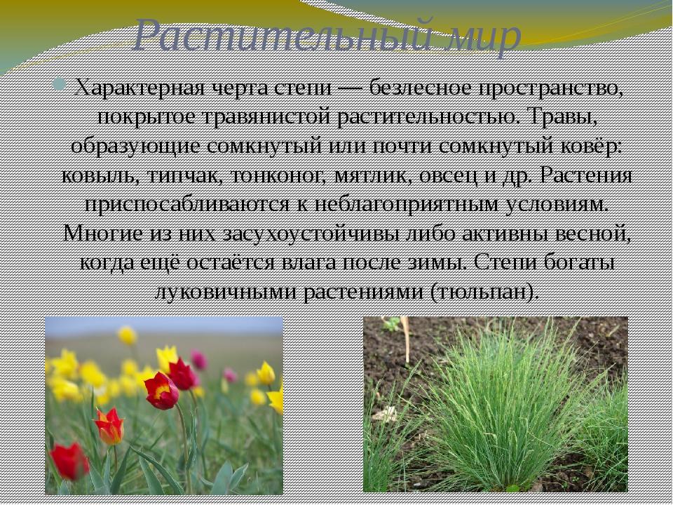 Растительный мир Характерная черта степи— безлесное пространство, покрытое т...
