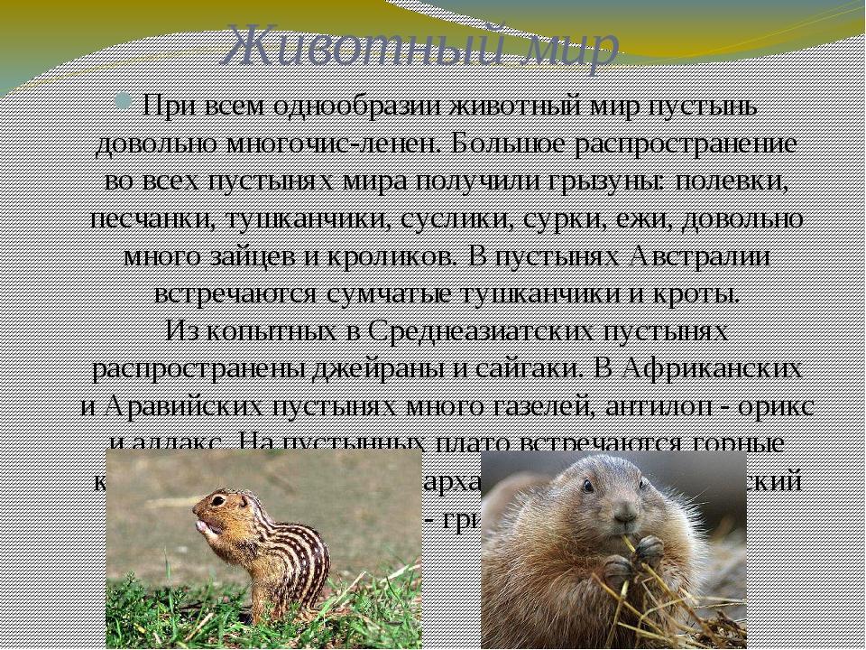 Животный мир При всем однообразии животный мир пустынь довольно многочис-лене...