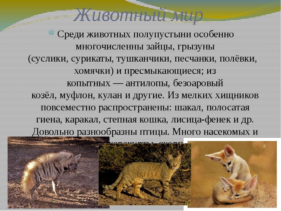 Животный мир Среди животных полупустыни особенно многочисленнызайцы, грызуны...