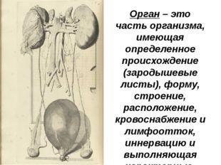 Орган – это часть организма, имеющая определенное происхождение (зародышевые