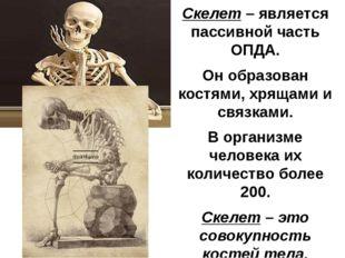 Скелет – является пассивной часть ОПДА. Он образован костями, хрящами и связк