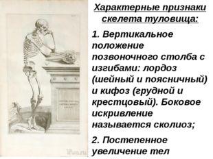 Характерные признаки скелета туловища: 1. Вертикальное положение позвоночного