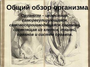 Организм – целостная, саморегулирующаяся, самовоспроизводящаяся система, сост