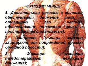 ФУНКЦИИ МЫШЦ: 1. Двигательная (вместе с костями обеспечивает движение тела и