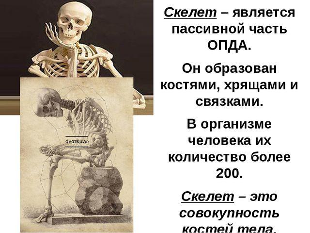 Скелет – является пассивной часть ОПДА. Он образован костями, хрящами и связк...