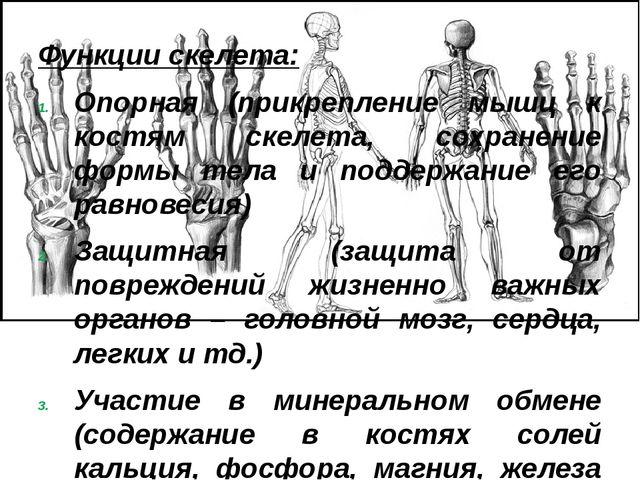 Функции скелета: Опорная (прикрепление мышц к костям скелета, сохранение форм...