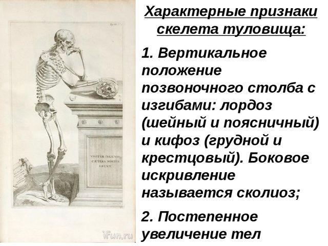 Характерные признаки скелета туловища: 1. Вертикальное положение позвоночного...