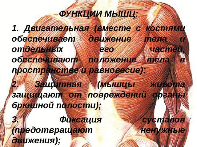 ФУНКЦИИ МЫШЦ: 1. Двигательная (вместе с костями обеспечивает движение тела и...