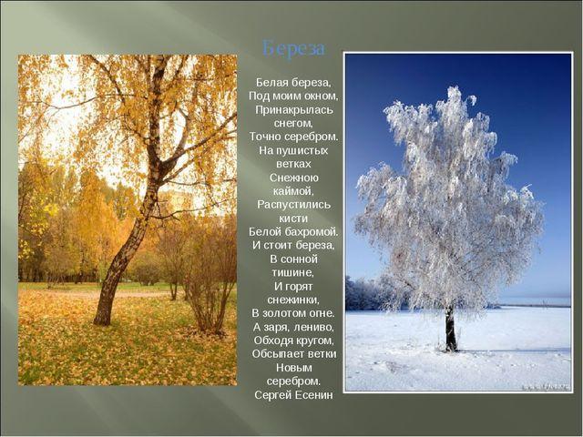 Береза Белая береза, Под моим окном, Принакрылась снегом, Точно серебром. На...