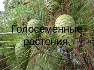 Голосеменные растения.