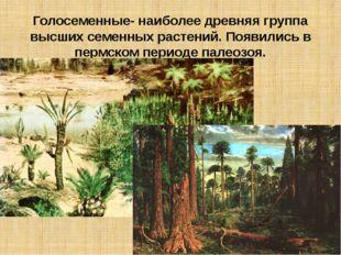 Голосеменные- наиболее древняя группа высших семенных растений. Появились в п