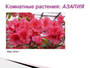 Комнатные растения: АЗАЛИЯ Март 2016 г.