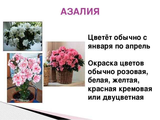 АЗАЛИЯ Цветёт обычно с января по апрель Окраска цветов обычно розовая, белая,...