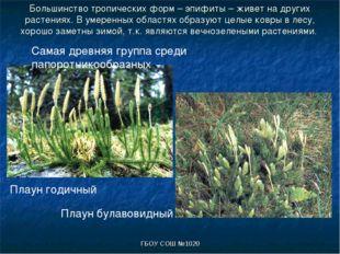 ГБОУ СОШ №1020 Большинство тропических форм – эпифиты – живет на других расте
