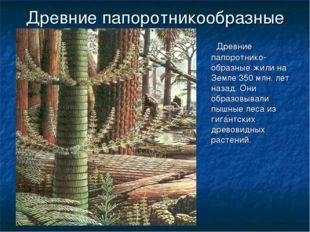 ГБОУ СОШ №1020 Древние папоротникообразные Древние папоротнико-образные жили