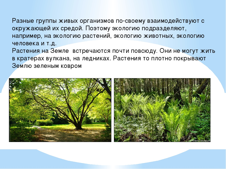 Разные группы живых организмов по-своему взаимодействуют с окружающей их сред...