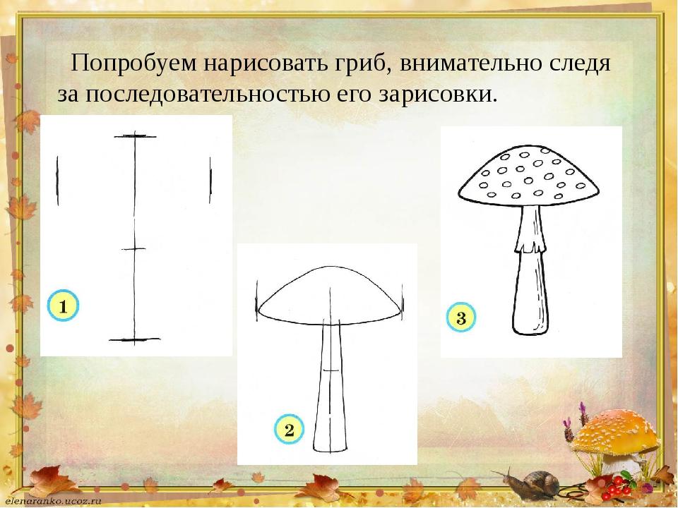 Попробуем нарисовать гриб, внимательно следя за последовательностью его зарис...