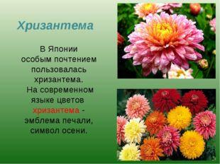 Хризантема В Японии особым почтением пользовалась хризантема. На современном