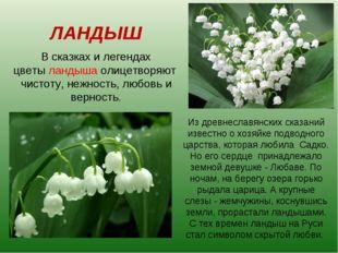 ЛАНДЫШ В сказках и легендах цветы ландыша олицетворяют чистоту, нежность, люб