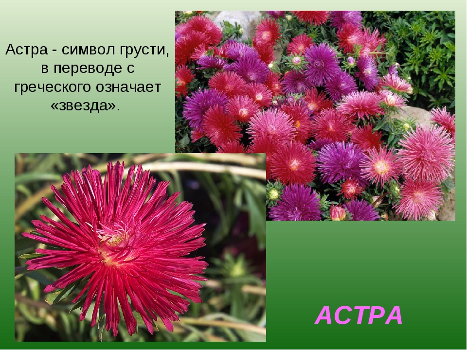 АСТРА Астра - символ грусти, в переводе с греческого означает «звезда».