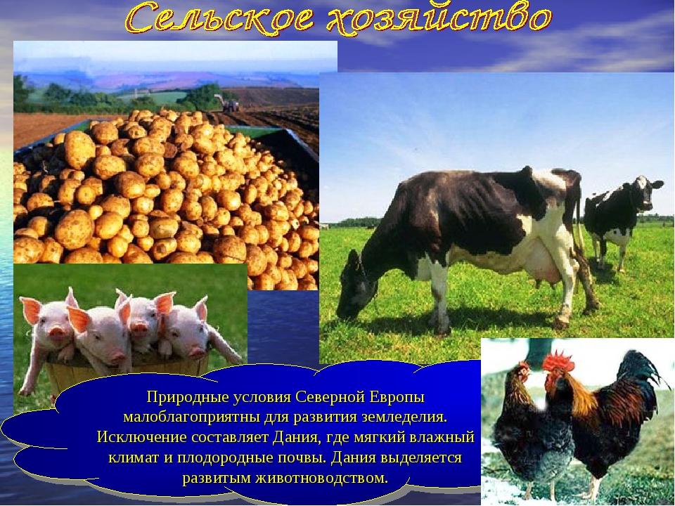 Природные условия Северной Европы малоблагоприятны для развития земледелия. И...