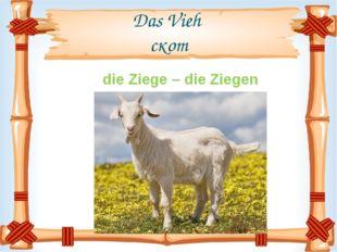 Das Vieh скот die Ziege – die Ziegen