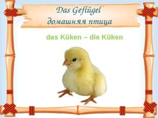 Das Geflügel домашняя птица das Küken – die Küken