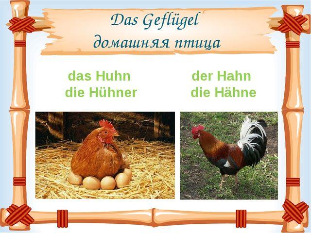 Das Geflügel домашняя птица das Huhn die Hühner der Hahn die Hähne