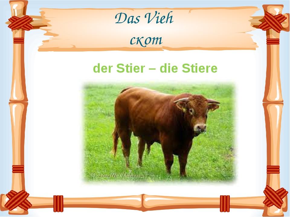 Das Vieh скот der Stier – die Stiere
