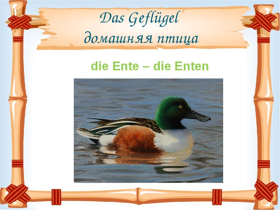 Das Geflügel домашняя птица die Ente – die Enten