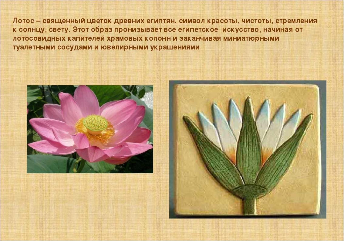 Лотос – священный цветок древних египтян, символ красоты, чистоты, стремления...