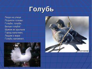 Голубь Люди на улице Подняли головы: Голуби, голуби, Белые голуби! Шумом их к