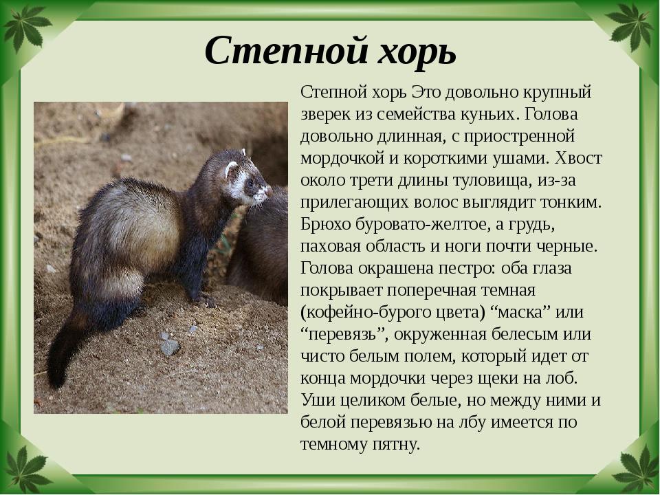 Животные красной книги орловской области фото конфликтов будем