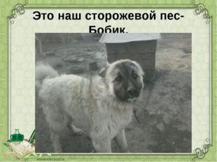 Это наш сторожевой пес-Бобик. Он главный во дворе.