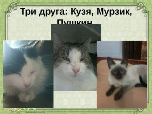 Три друга: Кузя, Мурзик, Пушкин.