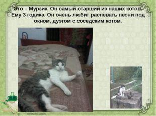 Это – Мурзик. Он самый старший из наших котов. Ему 3 годика. Он очень любит р