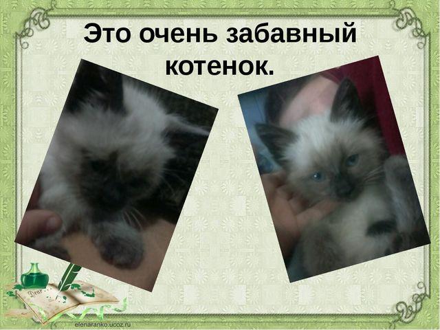 Это очень забавный котенок.