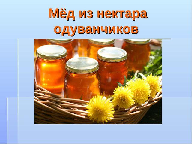 Мёд из нектара одуванчиков