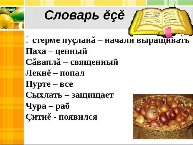 Ӳстерме пуçланă – начали выращивать Паха – ценный Сăваплă – священный Лекнĕ –...