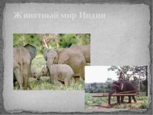 Животный мир Индии