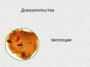 Доказательства эволюции Prezentacii.com